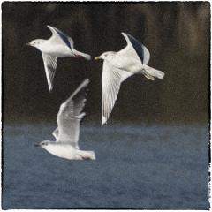 Waterballet © Arthur Moens