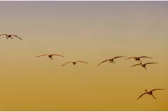 Op de vlucht © Ann Bonte