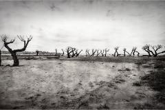 01 Dueso © Andre Van den Bossche