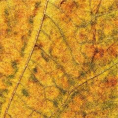 Road of veins © Christa Martens