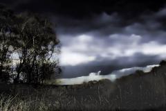 Epsom hill © Eric Colpaert