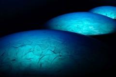Blue Bubbles © Freddy Nerinckx