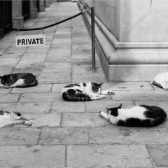 Cats of Dubrovnik © Freddy Nerinckx