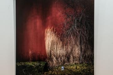 _DSC0237 © Marc Ganseman