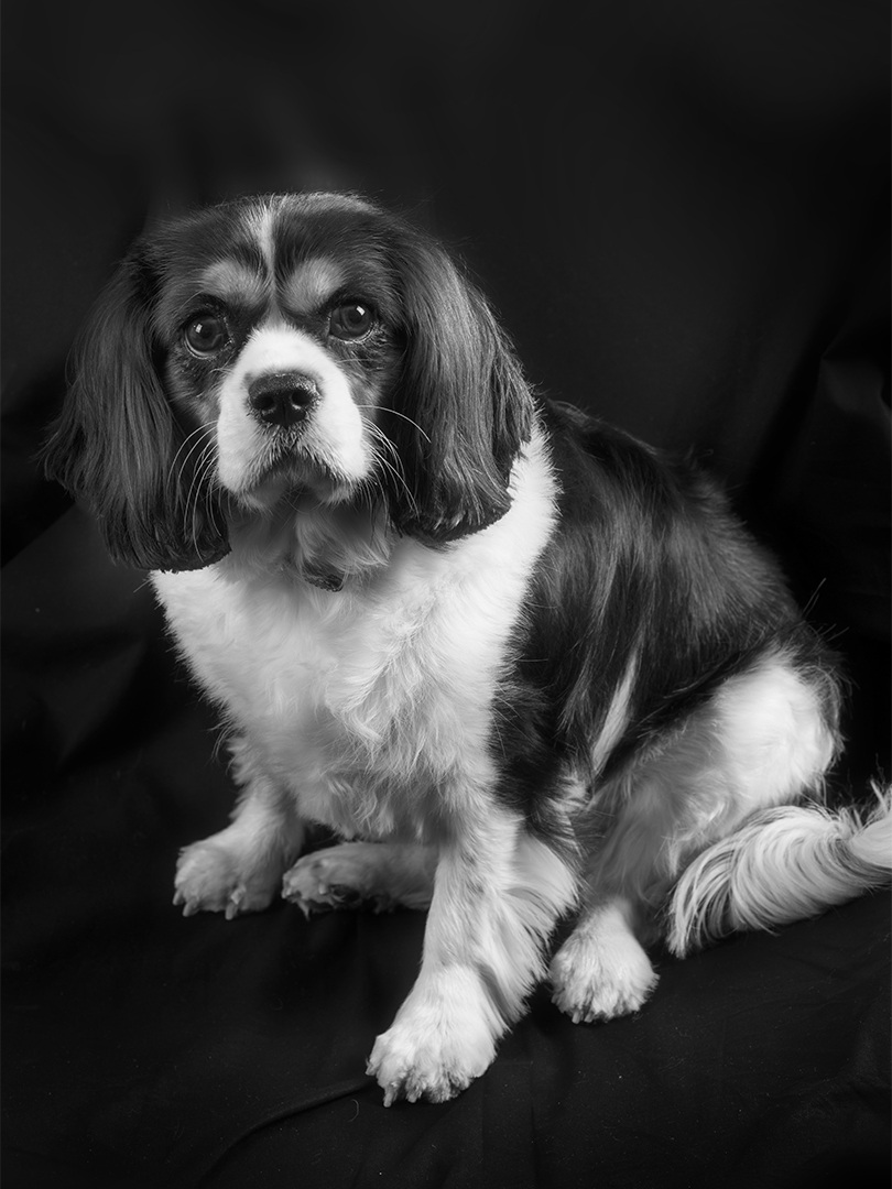 Hond Libertyt © Fodifi