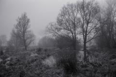 Meersen 1 © Hendrik Braem