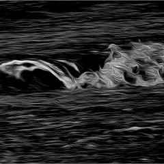 12 Sea horses © Mario Gautier