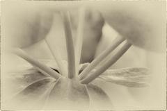 Soft & Tender © Robert Van Maele